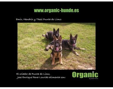 Pigment Plus (Pigmentadores Naturales para Perros)