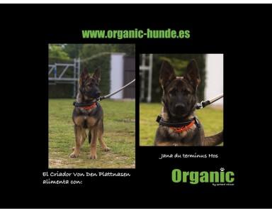 El Criador Von Den Plattnasen alimenta con Organic a sus perros