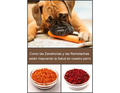 Zanahorias y Remolacha deshidratadas para Perros y Gatos|Organic y Olewo