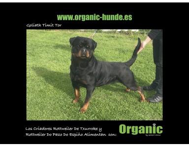 """Experiencias Reales de Nuestros Clientes satisfechos con """"Organic para Perros"""""""