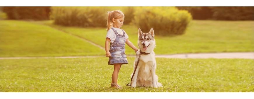Cintas de Correr para perros | Ejercicio Perros | Galasturhunde