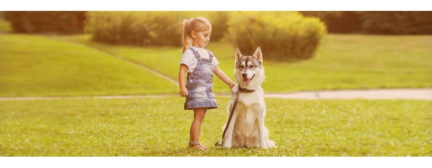 Cintas de Correr para perros / FitFurLife España/ Axesdog España / Galasturhunde