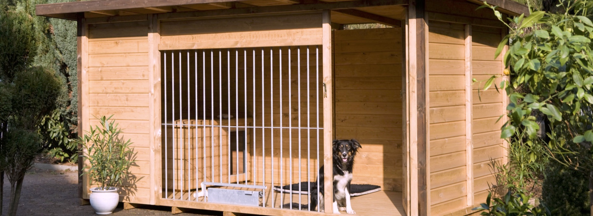 Boxes de madera para perros