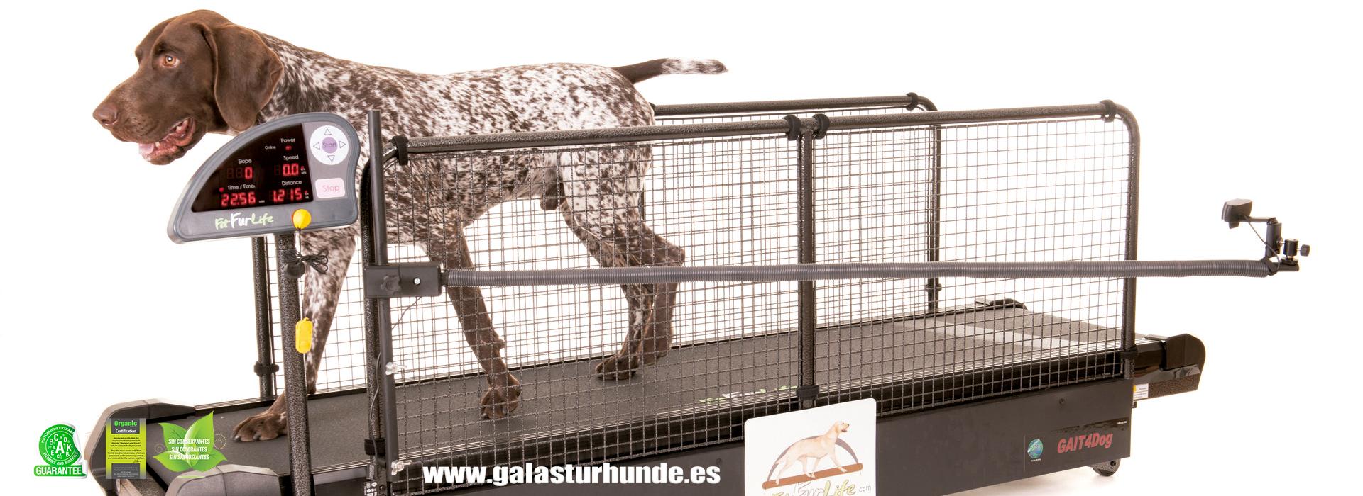 Cintas de correr para perros