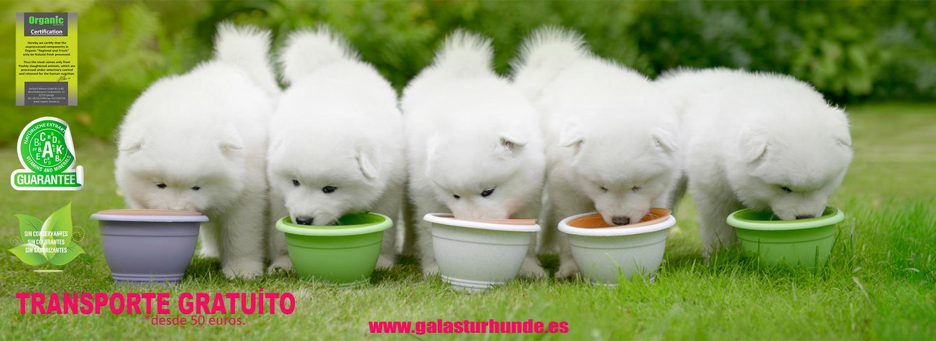 Pienso natural para perros con Carne Fresca